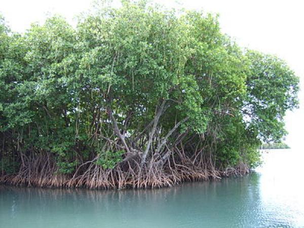Togo Mangroves