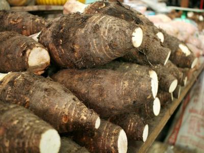 togo-des-travaux-pour-ameliorer-la-productivite-dans-les-filieres-plantes-a-racines-et-tubercules