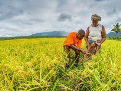 le-togo-a-produit-plus-de-150-000-t-de-riz-produits-en-2020
