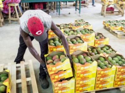 le-togo-2eme-exportateur-africain-de-produits-bio-vers-l-union-europeenne