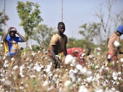 togo-nsct-awards-best-cotton-producers