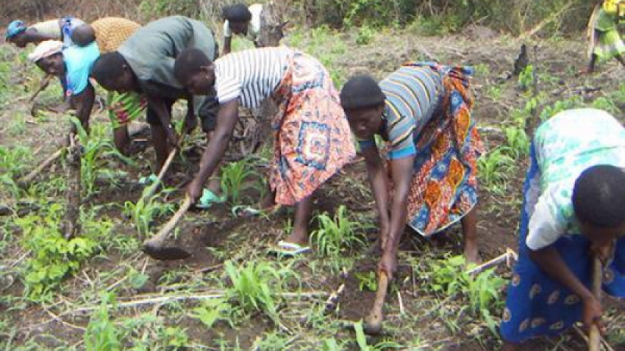 a-hundred-togolese-cooperatives-to-be-registered-with-the-fao-s-support