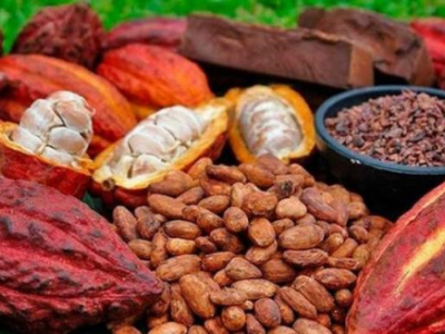 icat-to-supply-farmers-with-over-a-million-cocoa-and-coffee-seedlings-in-the-new-season