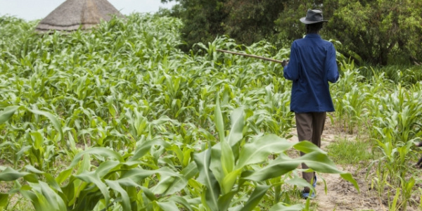 Togo: Business operators encouraged to invest in agriculture