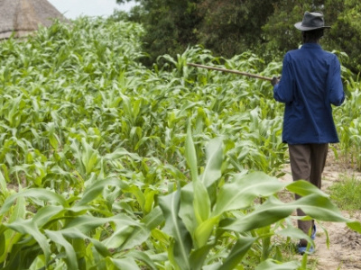 togo-business-operators-encouraged-to-invest-in-agriculture
