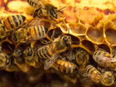 bee-farming-honey-and-wax-output-grew-significantly-in-2018-2019
