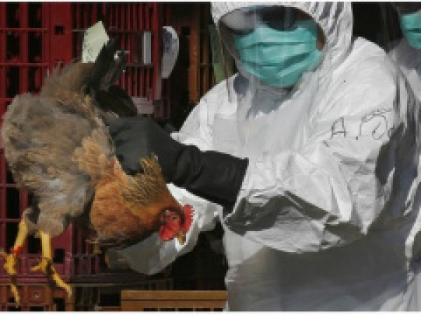 Togo adopts new plan to fight avian flu