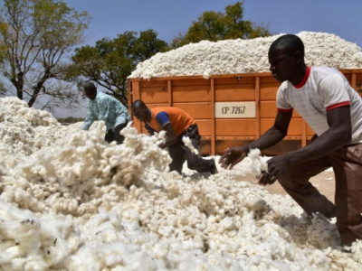 cotton-exports-from-togo-generated-cfa63-billion-in-2019