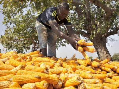grain-production-remains-strong-despite-covid-19