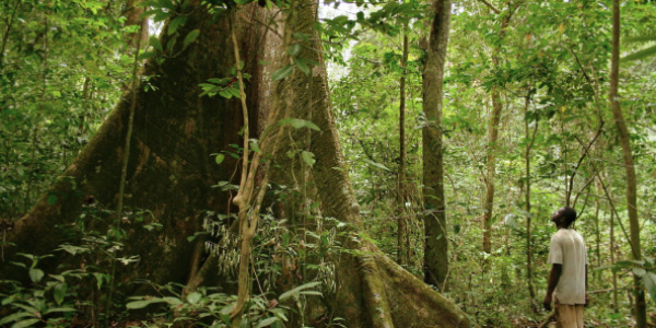Togo set to restore 35,000 hectares of forest lands in 2020