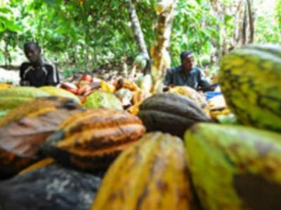 togo-les-acteurs-de-la-filiere-cafe-cacao-appeles-a-s-enregistrer-pour-la-campagne-2020-2021