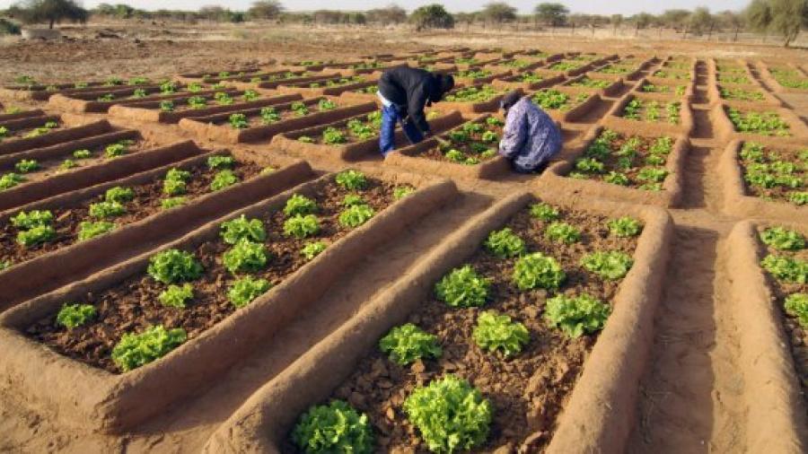 transition-agro-ecologique-l-araa-cedeao-subventionne-15-projets-dont-les-couts-varient-entre-240-474-et-305-000-euros