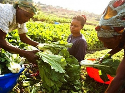 l-agence-de-promotion-et-de-developpement-des-agropoles-au-togo-va-etre-bientot-operationnelle