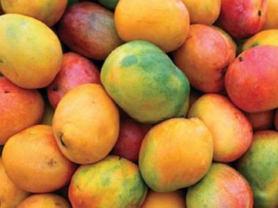 les-derniers-chiffres-de-la-filiere-mangue-au-togo