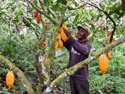 le-cirad-une-agence-francaise-de-recherche-agronomique-veut-renouer-ses-relations-avec-le-togo