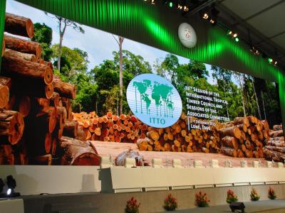 le-togo-espere-un-financement-de-pres-de-2-millions-du-conseil-international-des-bois-tropicaux
