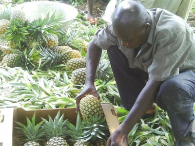 local-firm-secures-2-6m-to-produce-top-quality-natural-pineapple-juice