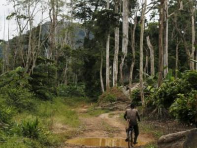 togo-comment-financer-un-plan-a-plus-de-100-millions-pour-la-gestion-durable-des-forets