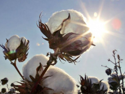 cotton-savannah-region-aims-to-remain-togo-s-leading-producer-for-2018-19-season