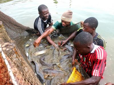 a-partir-de-mai-prochain-l-ifad-d-elavagnon-formera-ses-premiers-eleves-en-aquaculture