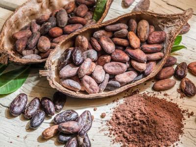 togo-les-exportations-de-cacao-ont-presque-triple-au-premier-trimestre-2019