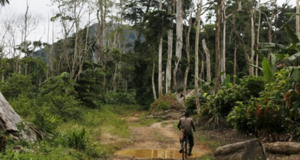 Togo seeks about $100 million for its new forest management plan