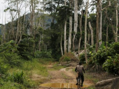 togo-seeks-about-100-million-for-its-new-forest-management-plan
