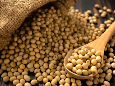 togo-producteurs-et-gouvernement-en-osmose-pour-developper-la-filiere-soja