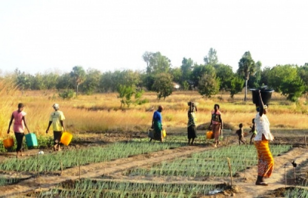 Togo: Agricultural Sector Support Project (PASA) currently under review