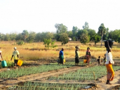togo-agricultural-sector-support-project-pasa-currently-under-review