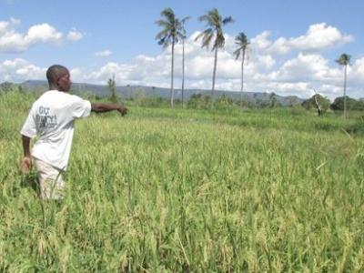 togo-la-fao-injecte-plus-de-88-millions-fcfa-au-profit-des-producteurs-forestiers-et-agricoles