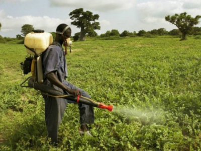 herbicides-atrazine-and-paraquat-are-still-forbidden-in-togo-ministry-of-agriculture-reminds