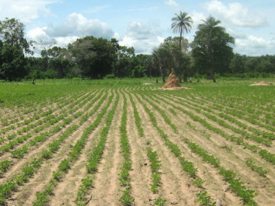 togo-private-owners-of-rural-arable-lands-must-valorize-these-lands-new-decree-imposes