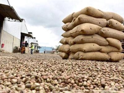 togo-la-federation-nationale-des-cooperatives-productrices-d-anacarde-table-sur-une-production-de-130-000-tonnes-a-l-horizon-2024