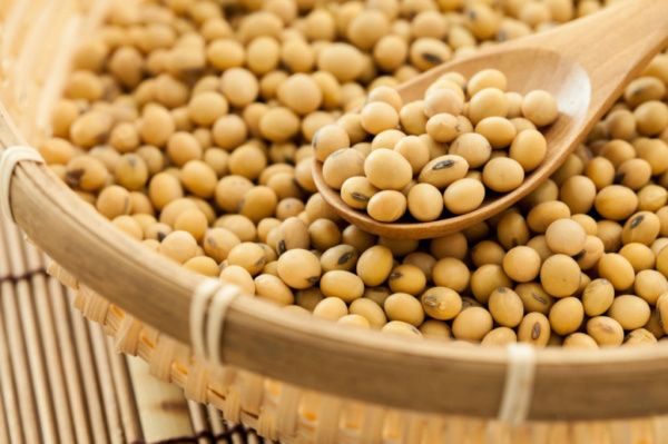 Exports of soybean from the recent campaign generated CFA 50 billion for Togo