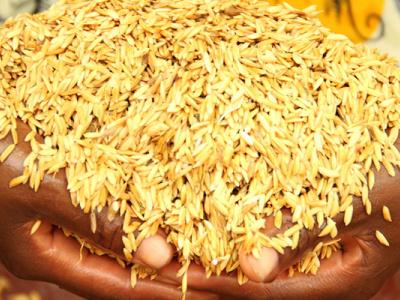 orabank-injecte-du-cash-dans-la-transformation-du-riz-togolais