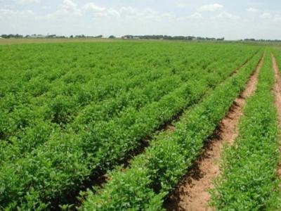 togo-xof38-billion-secured-so-far-for-kara-s-agropole-project