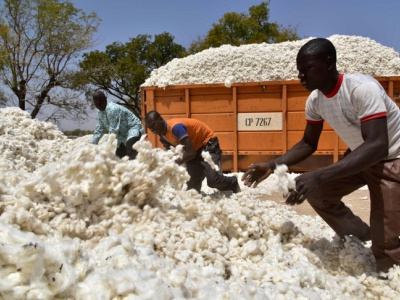 togo-des-recettes-d-exportations-du-coton-estimees-a-63-milliards-fcfa-en-2019