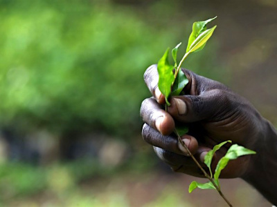 au-togo-l-office-de-developpement-et-d-exploitation-des-forets-a-produit-500-000-jeunes-plants-et-acquis-3-millions-de-tecks-entre-2013-et-2016
