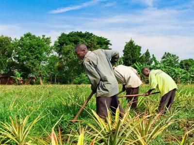 la-strategie-de-la-coordination-des-agropoles-pour-se-rapprocher-des-communautes-riveraines
