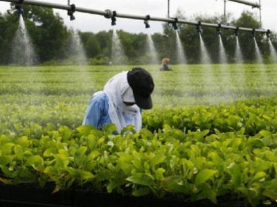 formation-agricole-de-nouveaux-diplomes-en-vue-a-l-infa-de-tove