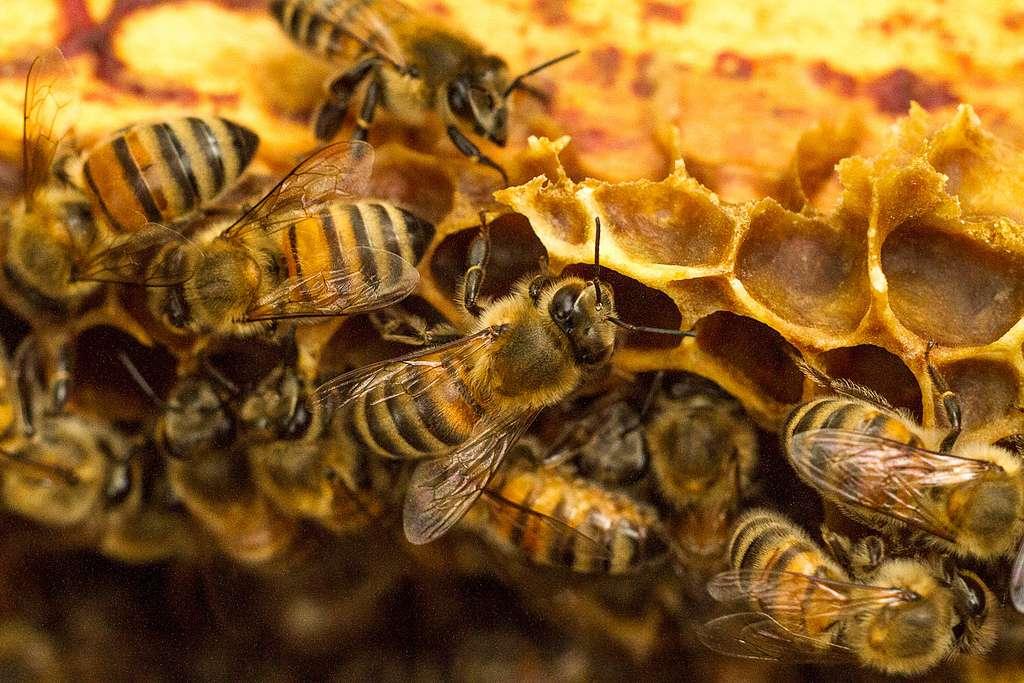 togo-l-embellie-de-la-filiere-apicole