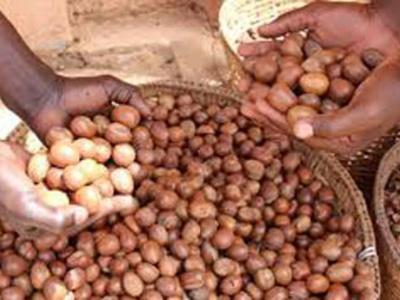 karite-vers-le-renforcement-des-exportations-dans-quatre-pays-d-afrique-de-l-ouest-dont-le-togo