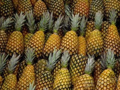 au-togo-une-federation-pour-les-producteurs-d-ananas-voit-le-jour