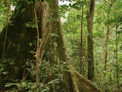 le-togo-veut-restaurer-35-000-hectares-de-foret-en-2020