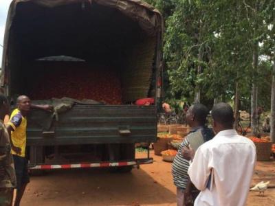 le-gouvernement-rachete-des-stocks-de-tomates-aux-producteurs-togolais-victimes-de-la-fermeture-des-frontieres-du-nigeria