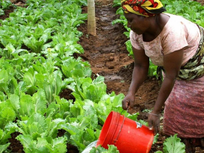 la-prefecture-de-kpele-accueille-la-phase-pilote-de-l-operation-telefood-2019-visant-a-creer-1000-entreprises-agricoles