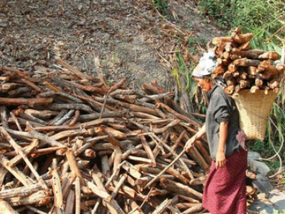 togo-wood-sector-contributes-11-to-gdp