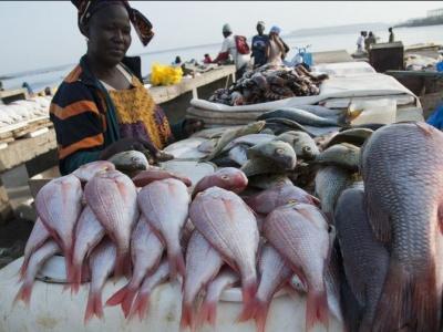 peche-plus-de-37-000-tonnes-de-poissons-capturees-au-togo-de-2018-a-2019