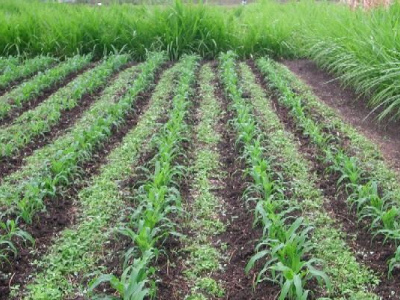 patae-togo-seeks-to-better-preserve-its-ecosystems-while-boosting-agricultural-output